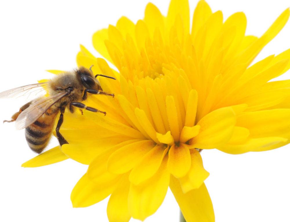 Goed Bee-zig 2.0